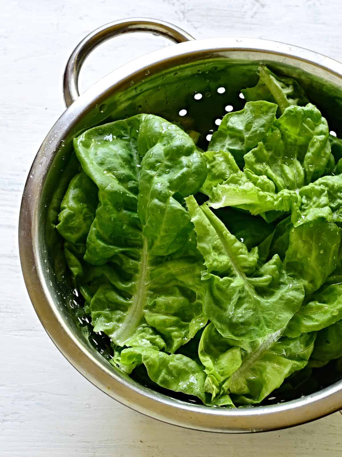 head lettuce leaves in a collander